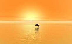 dolphin-1078319_1920_s