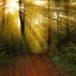 rays-1345745_1280_s