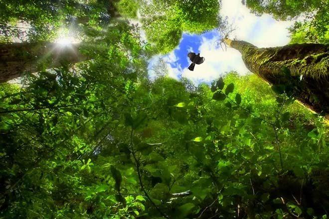 trees-979714_1280_s
